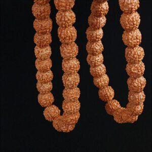 Bracelet graine de rudraksha naturelle